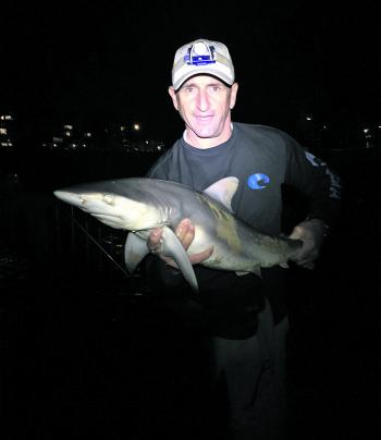 Darren Thomas with a whaler shark caught from the beach.