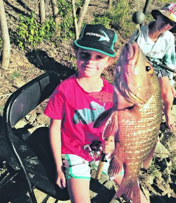 Mangrove jack, like this beauty caught by 7-year-old Nate West from Townsville, are usually the first species to become more active as the water temperature starts to climb into summer.