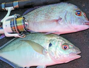 Closer to shore, try fishing lightly weighted baits or soft plastics in a berley trail for pan-sized snapper and trevally.