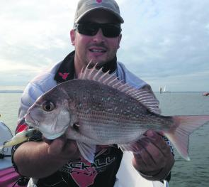 This small snapper was caught on a Jackall Transam at the Port of Brisbane recently.