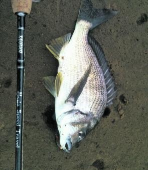 Marlo in East Gippsland in Victoria provided some great bream fishing. This fish fell to a Cranka suspending lure.