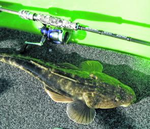 This 55cm flathead was taken on a Samaki 8g Battle Blade lure from the southern end of Lake Macquarie.