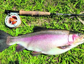 Martin Tucker got this fat 2kg rainbow on a trip up the Plateau when back in Coffs for a visit.