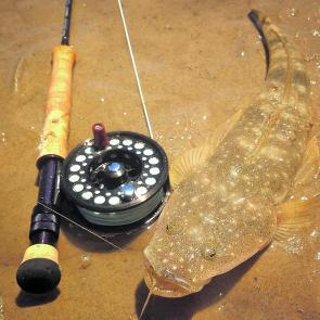 Flathead are the perfect introduction to saltwater fly fishing. Half a dozen Clouser Minnows and a nice light rig is all you need for hours flats fishing fun!