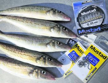 Don't take any chances when fishing for winter whiting, a Mustad Demon Circle hook with keep the fish connected throughout the fight.