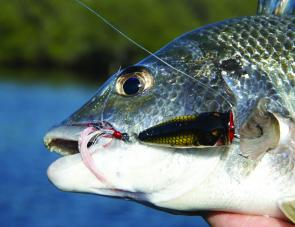 Targeting bream with poppers is all about fishing tidal zones where bream would expect to encounter food on or near the surface.