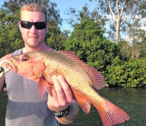 This toothy little critter came out of the brackish end of the Caboolture River