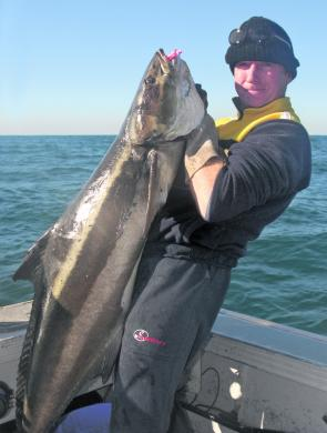 Cobia will start to show this month around the inshore bait schools and the desalination plant off Tugun.