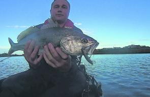 Scott Lovig holds a ripper Patterson River mulloway taken from his Hobie kayak early morning on a shallow diving 80mm minnow.