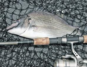 Working the rocky shores or weed beds of Lake Illawarra should result in a few bream.