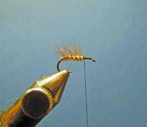 Tie in a small brown hackle and palmer it back to the bend of the hook; secure it in place as you wind on the gold rib.