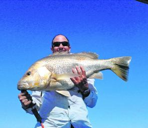A decent golden snapper caught out at the rubble patches at Karumba.