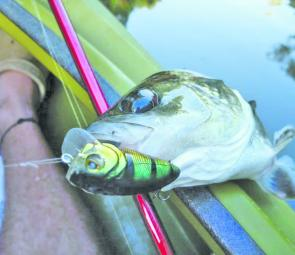 The new Austackle Chuggu lure passed the test with flying colours.