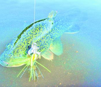 Murray cod will be worth targeting in both the lakes and rivers this month.