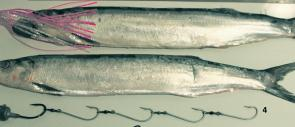 Example of some of the gear required to rig a wolf herring. These are dynamite Spanish mackerel baits.