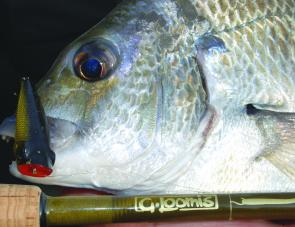 Bream make up the bulk of the catch around the shallow lake margins.