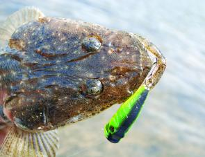 Flathead won't say no to a surface lure but are more likely to hit such lures in very shallow water.
