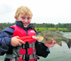 Somerset and Wivenhoe have been producing bulk amounts of golden perch. This smaller one was caught jigging a blade in the submerged trees at Queen Street, Somerset.