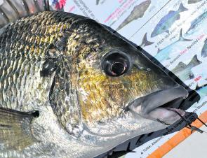 Bream are a popular target in the upper reaches.