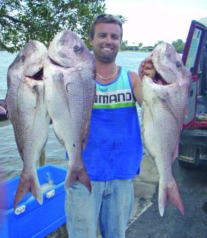 Scott Kitchell caught three excellent snapper recently.