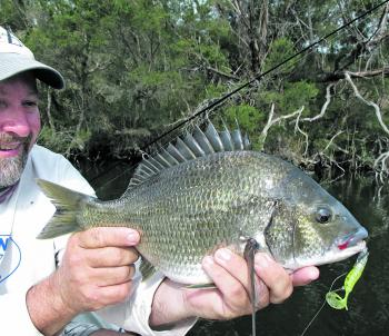 Gippy Lakes bream can't get any fatter than this snag dwelling horse of a fish. It took the author's hybrid lure made by crossing a soft plastic with a hardbody and adding w hooks. The uglier these homemade lures get, the better they work!