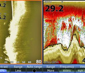 This Lowrance side scan image shows bait and bass adjacent to tall weed.