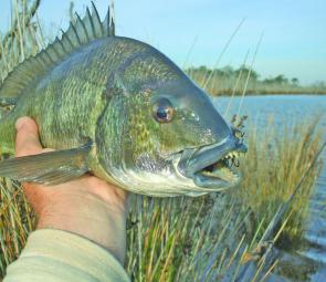 There are some very nasty and toothy bream eating lures at the moment!