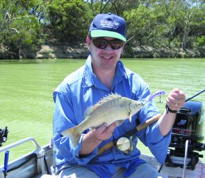 A fish in decline? Not necessarily in the Murray River around Mildura. This very feisty silver perch took a liking to the author's trolled purple 70mm Oargee Plow.