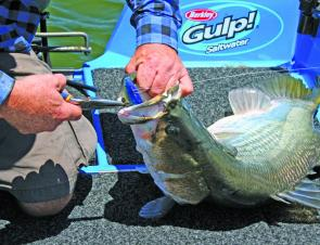 Soft plastic swimbaits will be one of the most popular styles of lures this month.