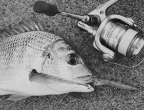 Bream have been a saviour in the Macleay River with good numbers hunting prawns and whitebait up towards Stuarts Point and in the feeder creeks around Smithtown.