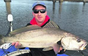 A nice soft plastic scoffing mulloway from up near the road bridge.