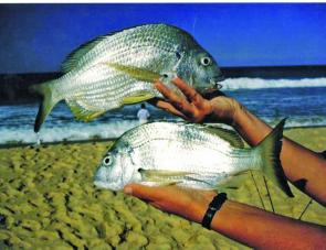 Quality bream are a result of berleying a beach.