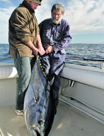 This was the first of a few winter bluefin to hit the deck.