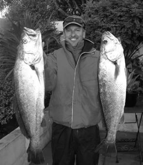 The author with a couple of mulloway caught trolling live bait in the estuary.