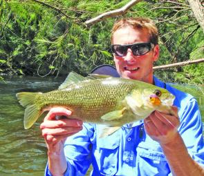 Worth coming for: A healthy Macleay River bass.