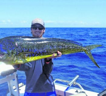 Mahimahi are a gorgeous by-catch when targeting mackerel. Look at those glorious colours!