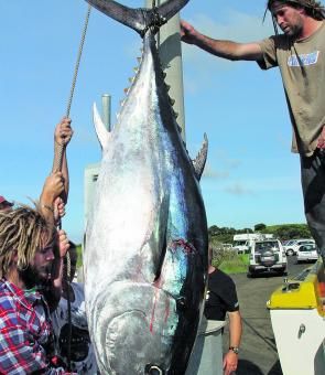 Large bluefin tuna like this 124kg fish have been caught with many more being lost south of Cape Otway.