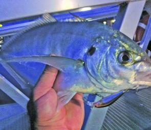 Tim Biviano with a silver trevally taken on a hardbodied lure. Photo courtesy Queenscliff Fishing Charters