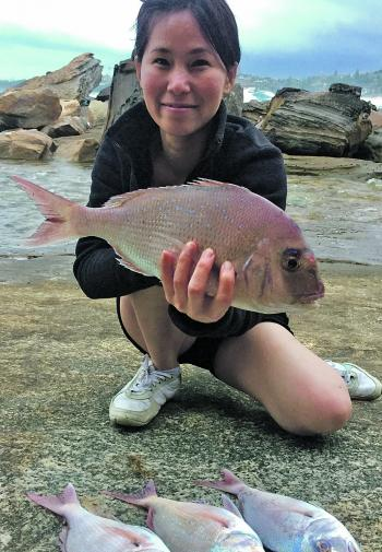 These are Thres Lim's largest fish so far – her PB snapper is 40cm. These were caught distance casting with whole bottle squid. Expect great bags of snapper this month.