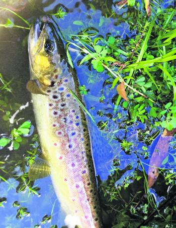 The trout fishing in May each year is excellent as the fish feed up in preparation for the annual spawn run.