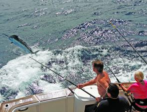 It's not over until the tag goes in. A solid black marlin greyhounds away from the transom of Born Free.