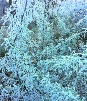 The famous New England frosts see the bushes dripping in thick icicles and the fish not as willing to take your offering.