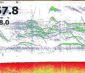 A Lowrance sounder shot showing very active bass at St Clair with a jig in among them.