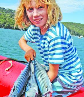 Bonito were on for young and old in Pittwater.