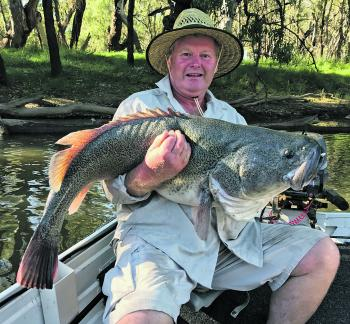 Brian Higginson with this once in a lifetime catch – a metre plus cod on a surface lure from the Murrumbidgee River.