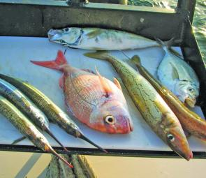 You have to love a great Port Phillip mixed bag – snapper, garfish, whiting and trevally.