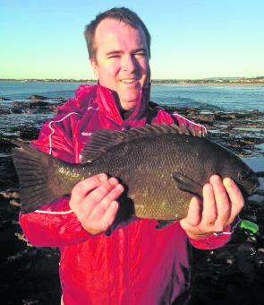 A 46cm pig caught off the rocks. This fish put up a great fight.