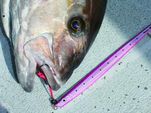 The SureCatch jig in one of its victims faces. They are affordable and good jigs worth throwing in your jigging bag.