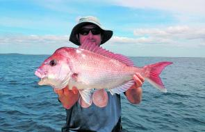 The deeper reefs are still producing, with snapper taking both baits and plastics.