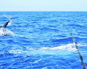 March is a great month for billfish both inshore and offshore.